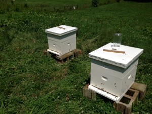 Add Bees to Farm Day One
